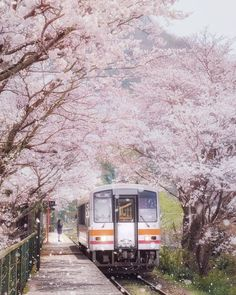 Visit Japan: Miura Station in Okayama looks like a cherry blossom fairy tale in spring! Okayama, Places To Travel, Places To Visit, Japan Train, Aesthetic Japan, Travel Aesthetic, Visit Japan, Asia Travel, Uganda Travel