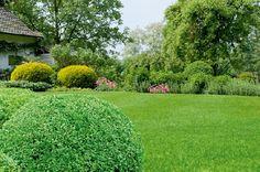 Gardenplaza - So haben Moos und Beikräuter auch in der warmen Jahreszeit keine Chance - Für einen saftig grünen Rasen im Sommer