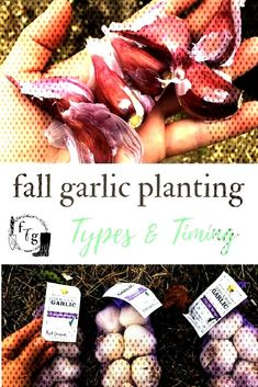 #websiteplanting #fallgardening #herbgardening #ga... Planting Garlic In Fall, Autumn Garden, Herb Garden, Vegetables, Plants, Herbs Garden, Veggies, Vegetable Recipes, Plant
