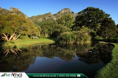 Kirstenbosch National Botanical Garden Cape Town, South Africa    |     Cheap Flights to Africa: http://www.airafrica.co.uk/destinations/south-africa/cape-town   |    #southafrica #picoftheday #pic #photo #beautiful #flights #flightstocapetown #cheapflightstocapetown #flightstosouthafrica #travel #travelphotography #travelafrica #travelblog #airfares #booknow #bookonline #airafrica #africantravel #cheapflights #cheapflightstosouthafrica #travelagentsinuk #garden #kirstenbosch