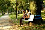 banc et arbre