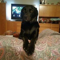 Quando anche il tuo cane è stanco di vedere Demolition Man per la centosettordicesima volta Foto di @rcfoto #BauSocial  #Milano #dog #meticcio #cane #cinema #demolitionman #demolitiondog #sly #snoopy #love #sofa #amazing #beautiful #blackdog #instadog #doglovers #dogstagram #puppy