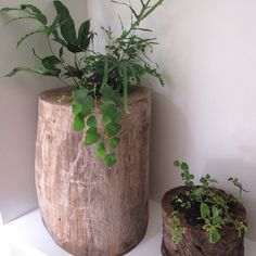 tree stump miniature ferneries by a little green #treestump #alittlegreen