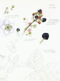 Sketchbook Studies – Lizzie Harper Illustration ¦ Botanical Illustration &…