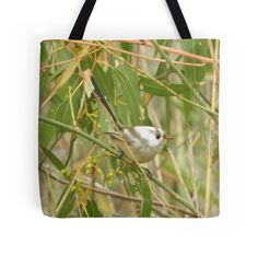 Fairywren with white head by BirdBags Small & Large