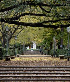 Botánico en Otoño.  #jardinbotanico #Madrid