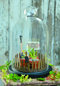 Cloche jars were traditionally used to protect young plants from the cold. We took this idea and created our very own mini-garden!