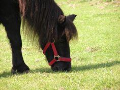 She is so lovely.... #cute #pony #tina #shetlander #holland #outside