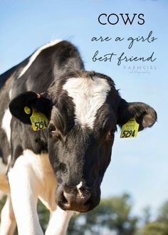 Miniature Breeds Of Cattle That Are Perfect For Small Farms Cow Quotes, Farm Quotes, Rodeo Quotes, Farm Animals, Cute Animals, Show Cows, Country Girl Quotes, Country Life, Cute Cows