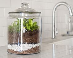 how to make a terrarium speech How to make a terrarium speech essays remember: the type of container you choose determines which plants you can use however, the two are equally easy to make and.