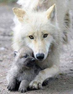 Just look at this sweet momma wolfs face Ann look at her tiny cub. So precious!