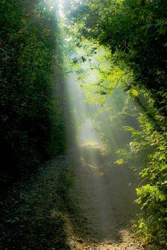 A light unto my path...