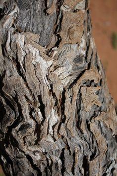 TREE BARK near Ularu, Ayers Rock, Australia. I'm fascinated by tree bark sometimes.