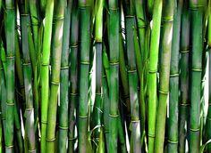 5 Productive Tips AND Tricks: Backyard Garden Flowers Patio backyard garden design fruit trees.Backyard Garden Herbs How To Grow. Small Backyard Gardens, Backyard Garden Design, Rustic Backyard, Tropical Gardens, Tropical Plants, Garden Landscaping, Feng Shui, Growing Bamboo, Growing Grass