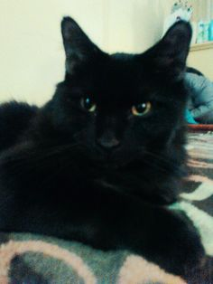 my long haired cat Hoppy