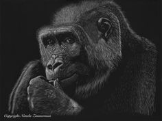"""Sublime Simian"" Original 14 by 18 Scratchboard Art, Zimmerman, Wildlife, Artist, Animals, Animales, Animaux, Animal Memes, Animal"