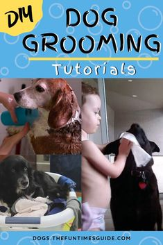 DIY Dog Grooming Tutorials + Tips For Dealing With Shedding, Stains And Odors Dog Grooming Tools, Dog Grooming Styles, Dog Cleaning, Teeth Cleaning, Dog Nail Bleeding, Smelly Dog, Dog Care Tips, Pet Care, Pet Tips