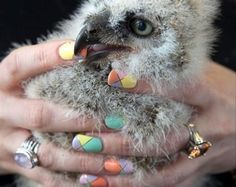awesome nails. awesome owl. all around awesome.