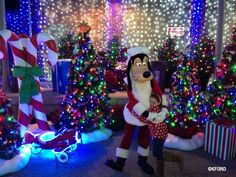 Enjoying the Osborne Family Lights at Disney's Hollywood Studios