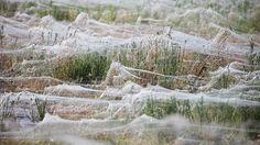 Massive spiderwebs engulf Australian town as arachnids escape floods