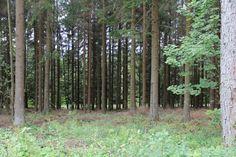 Forest 3 by Chocomix-Stock.deviantart.com
