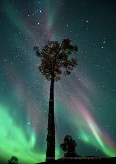September's Aurora   Image Credit & Copyright: Fredrick Broms (Northern Lights Photography)   [APOD]