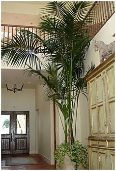 Minimalist small tropical garden design not necessarily Plantas tropicales interior