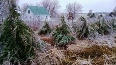 Pics from Ice Storm 2015 on our Kansas farm: