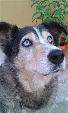 mi perra CARLA