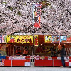 """Sakuras this is the end for this year. I don't know when I'll see you again in Japan but I just would like to say """"thank you"""".  Chers cerisiers on approche désormais de votre dernier spectacle de l'année. Je ne sais pas quand je pourrai vous revoir au Japon mais j'aimerai simplement vous remercier.  #japan #japon #hanami #hanami2019 #takoyaki #yatai #streetfood #sakura #cerisier #flower #pink #igersjapan #thisistheend #thankyou #bestjapanpics #bestjapanpics_ #japanexplorer #japantrip… Sakura, Food Stall, See You Again, Broadway Shows, Instagram, Cherry Blossom, Spring"""