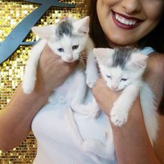#UberKITTENS at Too Faced HQ #toofaced