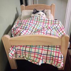 15.3.21 Cats Wallpapers Crazy Cat Lady, Crazy Cats, Weird Cats, Cat Bedroom, Bed Back, Cat Behavior, Cat Wallpaper, Cat Furniture, Nature Animals
