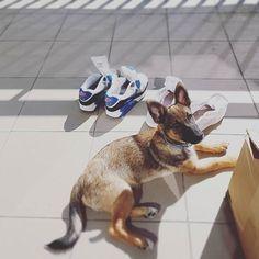 Nie bój nic ja tu przypilnuję  #puppy #lexithelady #lexithedog #dogtag #dogstagram #love #niekupujadoptuj