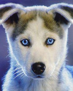 Husky ========================= Bonjour, pour les bijoux Gaby Féerie => http://www.alittlemarket.com/boutique/gaby_feerie-132444.html