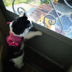 Neighbor's Cat Comes to See His Dream Girl Almost Every Day For Two Years...