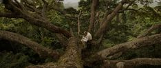 Francis Hallé, in the canopy of a Moabi tree (Baillonella toxisperma) in Ivindo National Park, Gabon. Secret Life, The Secret, Francis Hallé, Halle, West Africa, Ecology, Bald Eagle, Canopy, Behind The Scenes