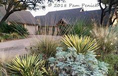 front garden of Pam Penick, Austin, Texas, January.