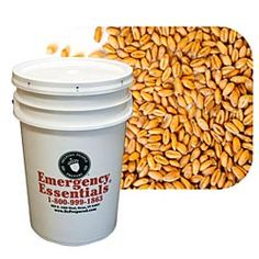 Hard red wheat for bread. Also delicious for wheat berry salads--$44.95