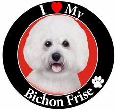 Dog Breed Magnets I Love My Bichon Frise   #Dog Breed #Magnets I Love My #Bichon Frise Dog Breed Magnets I Love My Favorite Car Dog Magnets Car Magnet Easy On-Easy Off! Great for Cars, Trucks, Refrigerators, Lockers, Kids or any Magnetic Surface Dog Breed Magnetic Express your love for your pet with our dog breed and animal magnets