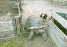 Tortise Roadblock
