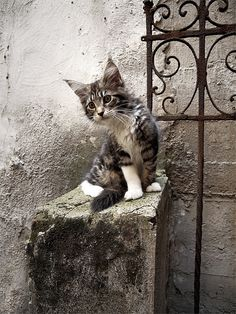♔ It' s a cats world