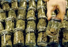 State could benefit significantly from marijuana dispensaries