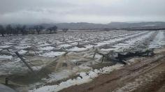 El Gobierno murciano ha dado por concluida oficialmente la situación de emergencia por nieve, frío, viento y fenómenos costeros que se inició el pasado día 17 con la activación del niv ...