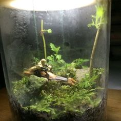 Star wars terrarium moss garden Endor in a Jar $159 - Like watching paint dry? Then you'll surely love watching grass grow. Get this Star Wars themed moss garden in a jar and add some greenery to your dreary work space!