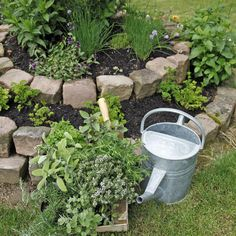 Planting herbs: the best tips and tricks - Do you want to plant herbs in your garden? How about a decorative herb spiral. Hydrangea Seeds, Hydrangea Shrub, Hydrangea Care, Hanging Plants, Indoor Plants, Back Gardens, Outdoor Gardens, Le Baobab, Herb Spiral
