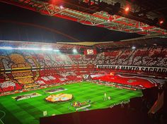 Benfica 2016/2017