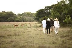 Phinda Forest Lodge | Specials 4 Africa