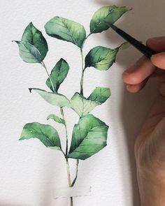 How To Paint Realistic Watercolor Roses: Watercolor Leaves, Watercolor Rose, Watercolor Drawing, Watercolor Artists, Watercolor Techniques, Watercolor Illustration, Illustration Botanique, Plant Drawing, Floral Illustrations