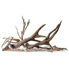 Borneowild Numauddo Driftwood , Find Complete Details about Borneowild Numauddo Driftwood,Aquarium Driftwood from Other Pet Products Supplier or Manufacturer-AQUA CULTURE TRADING