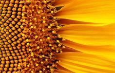 28 Elegant Macro Flower Pictures